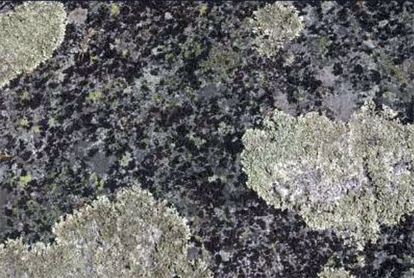 Lichen Removal